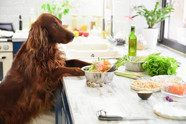 Dog looking at vegetables on the kitchen counter