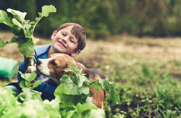 Fresh vegetables from my garden Little gardener and his dog in vegetable garden dog vegetables stock pictures, royalty-free photos & images