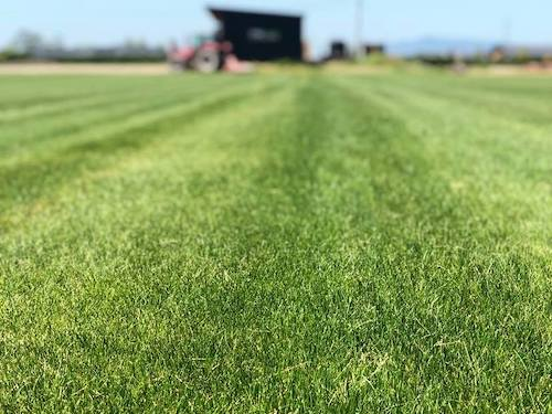 Lawn Seed Quality