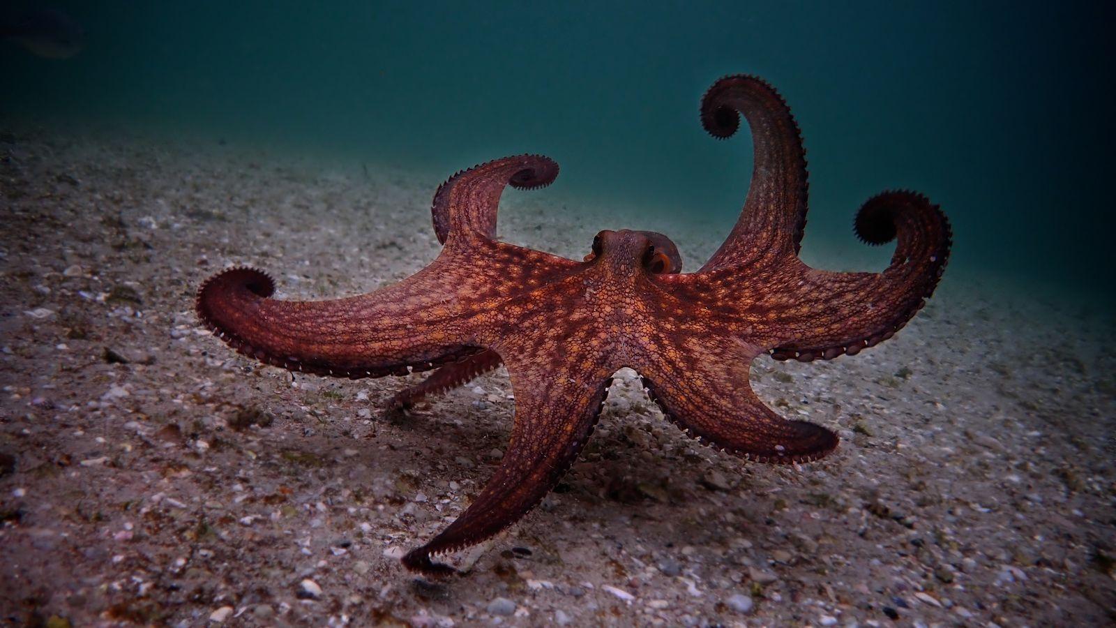 My Octopus Teacher release date