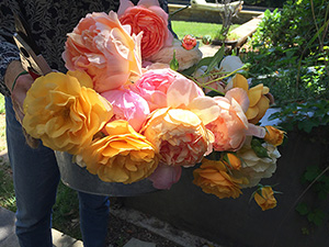 Photo of a basket of flowers from Cathy's garden and link to description.