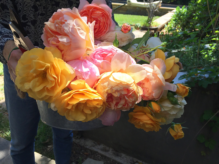 Photo of a basket of flowers from Cathy Waterman's garden.