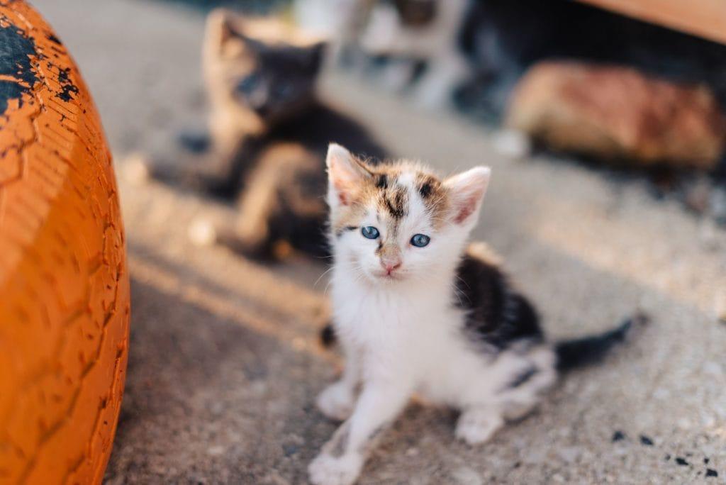 Surveys Kill Kittens
