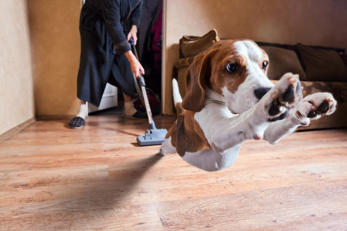 Legendary Tales of Customer Experience: The Roomba That Went Bump in The Night