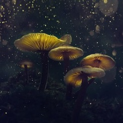 A close up image of five golden mushrooms sitting on hill on a dark night with lights aglow