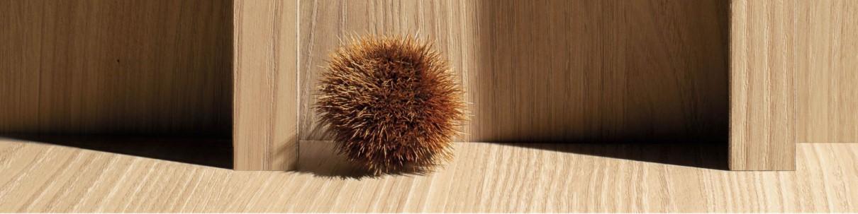 Grey sea urchin