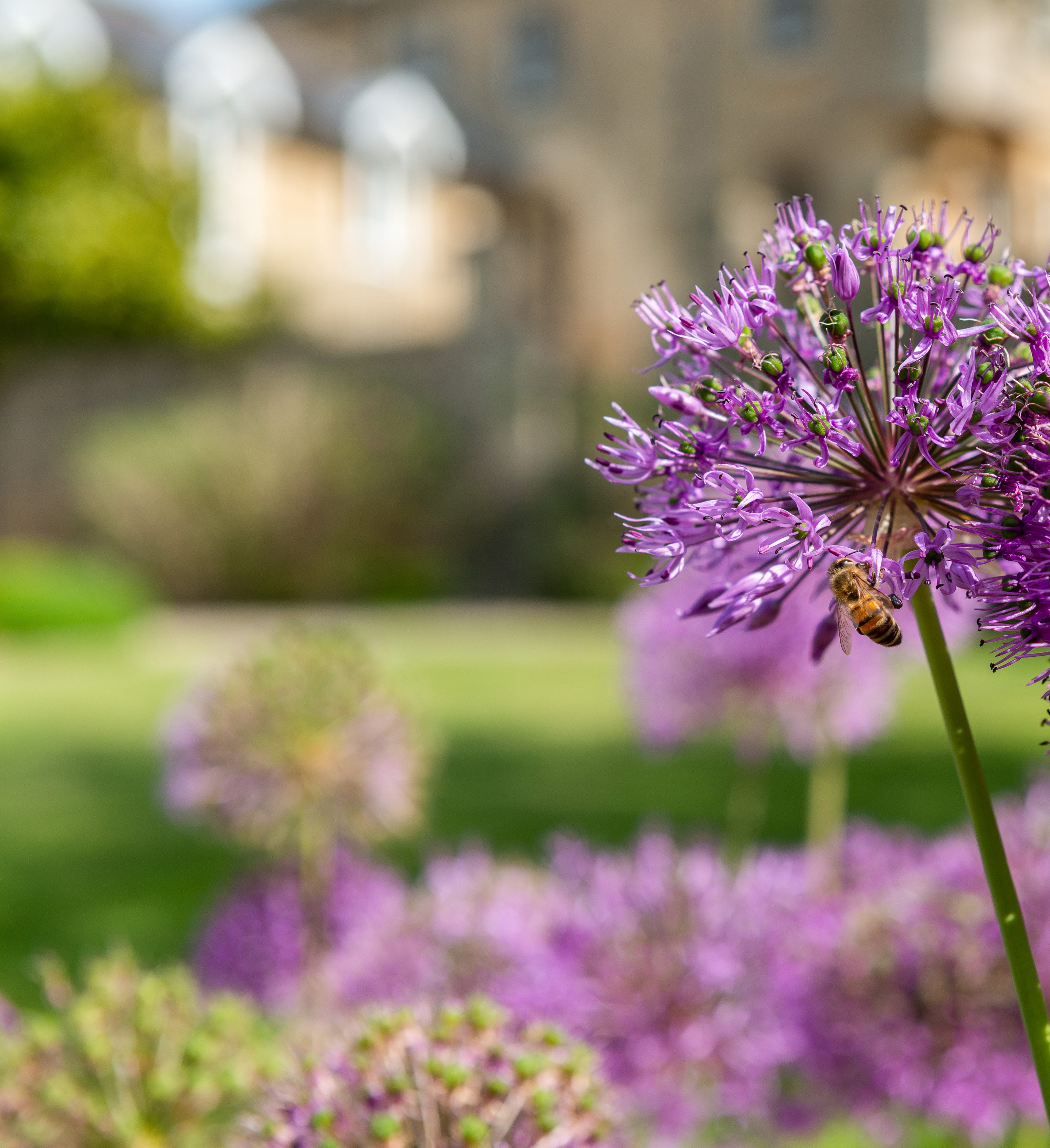 A bee on a flower at one of The Country House Department's properties