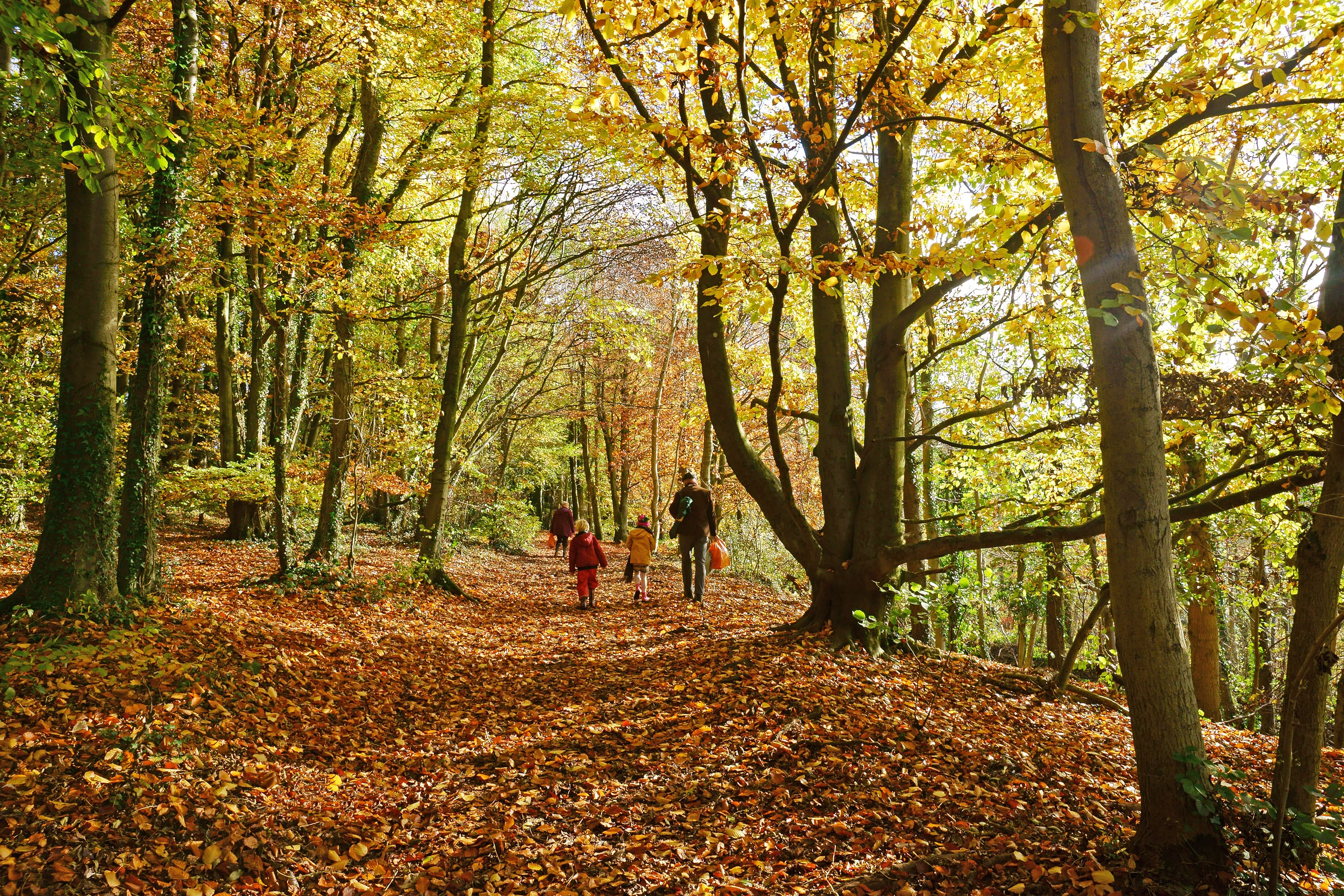 Family woodland walks in the Cotswolds