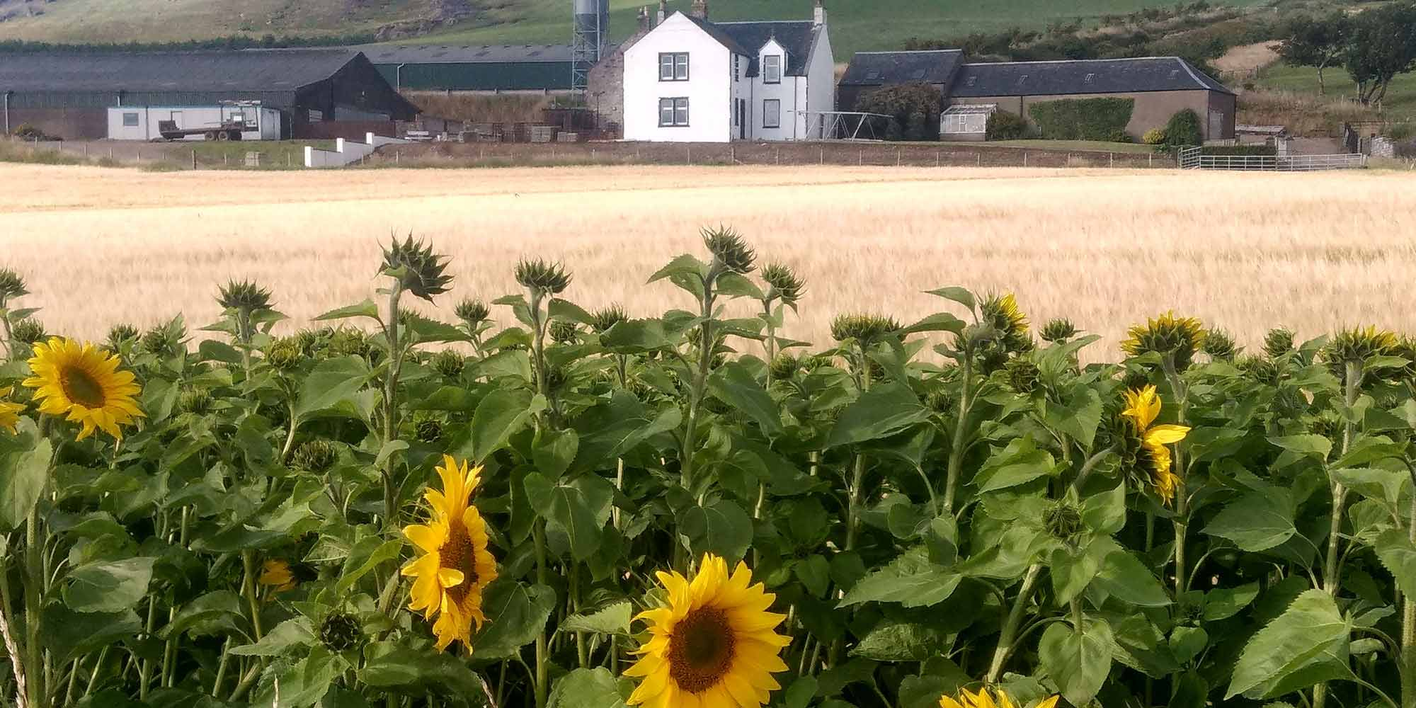 Glencraigs Farm