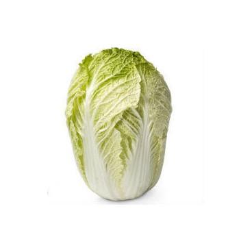 Cabbage - Wombok