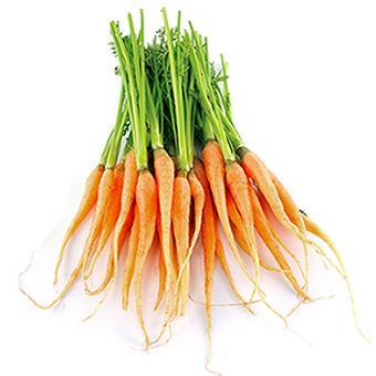 Carrots - Baby Dutch