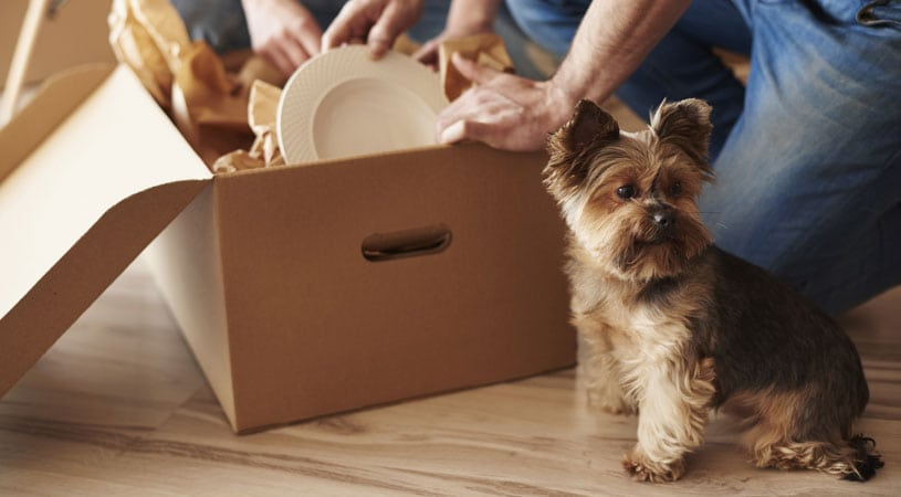 pet puppy moving from melbourne to sydney