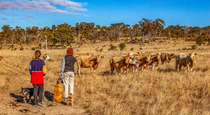 cattle farmers living in country australia