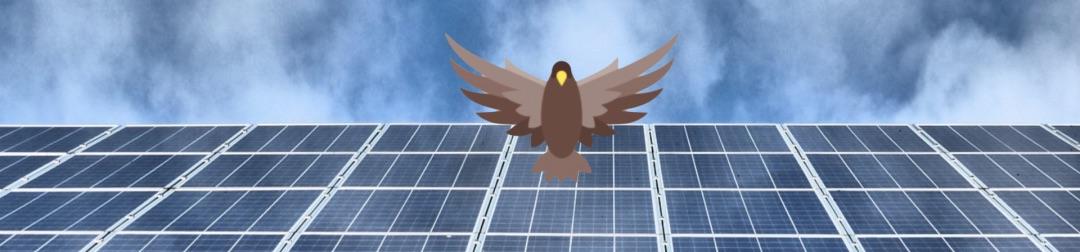 Ein brauner Adler mit Photovoltaikanlage im Hintergrund, was eine Inselanlage darstellt