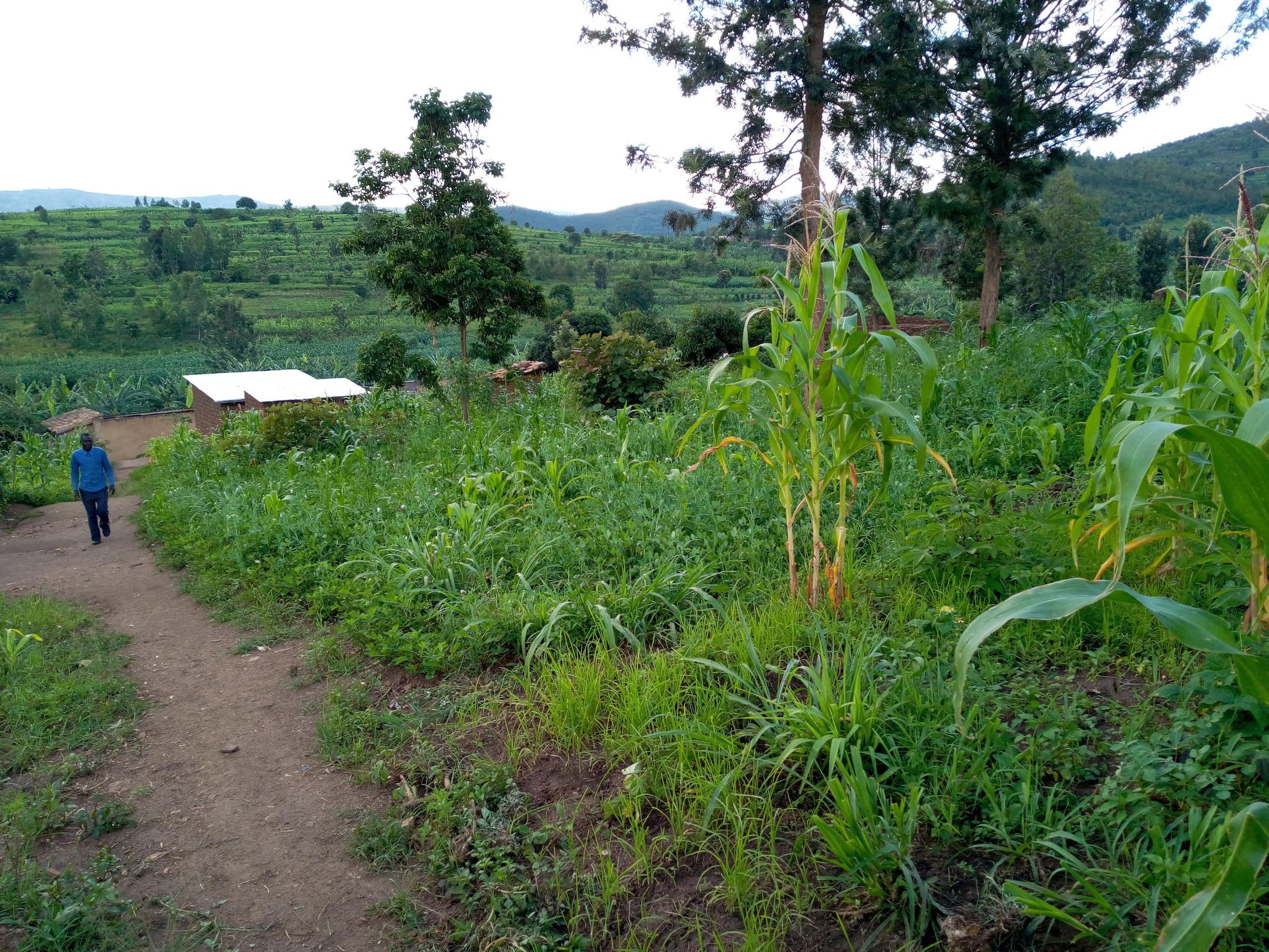 Mukuma, Rwanda