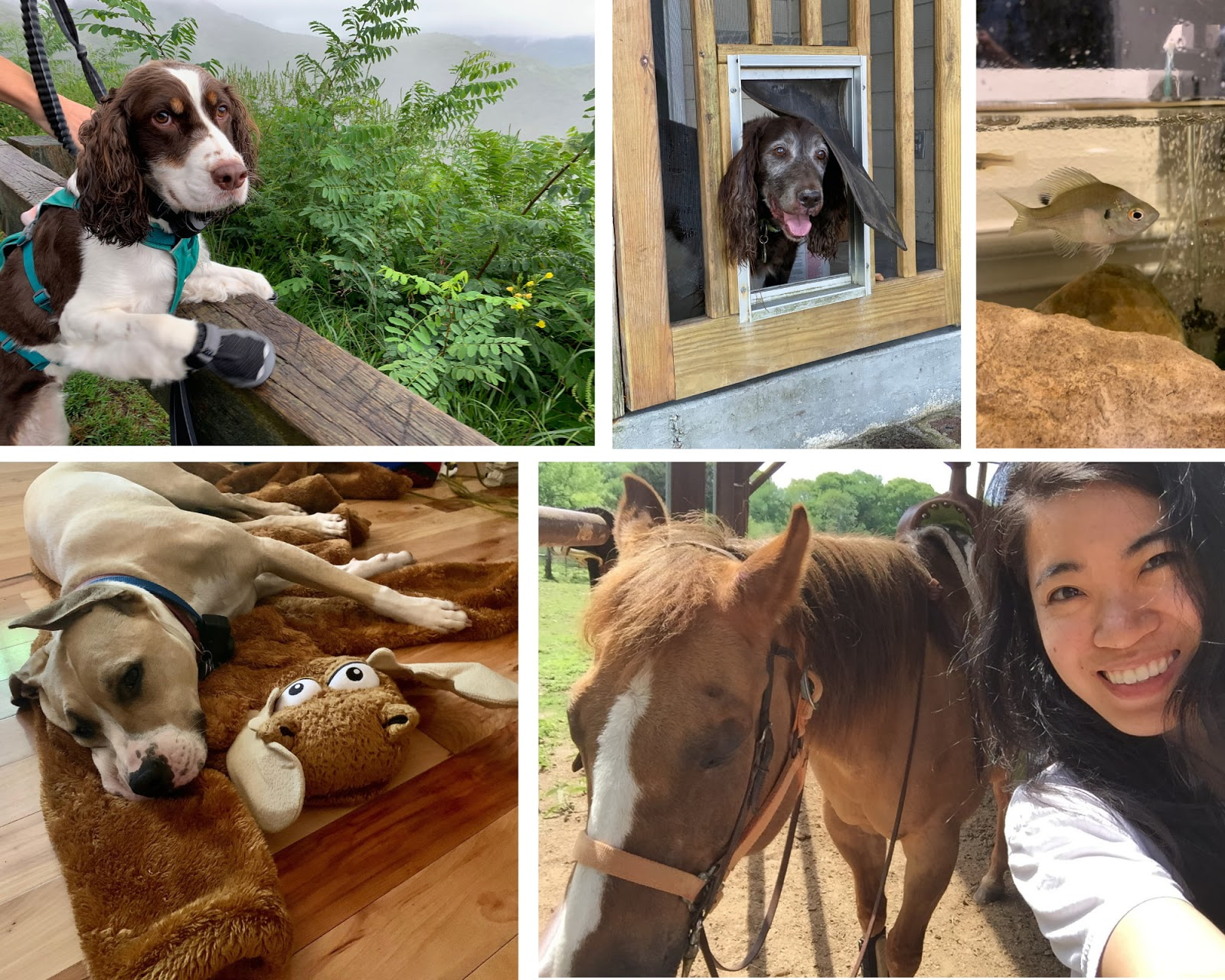 A photo collage that shows of the pets of Krti Team members.