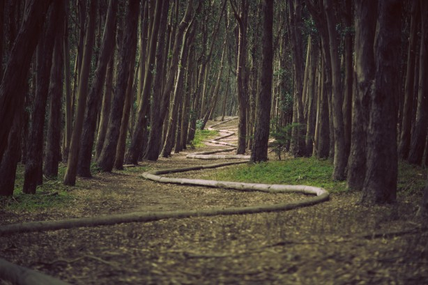 forest-trail-by-James-Forbes-unsplash-CC.3.0