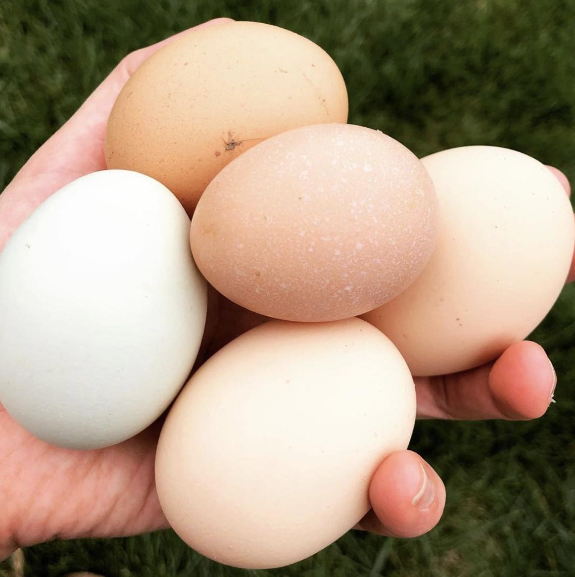 fresh eggs at sycamore hollow farm in Virginia