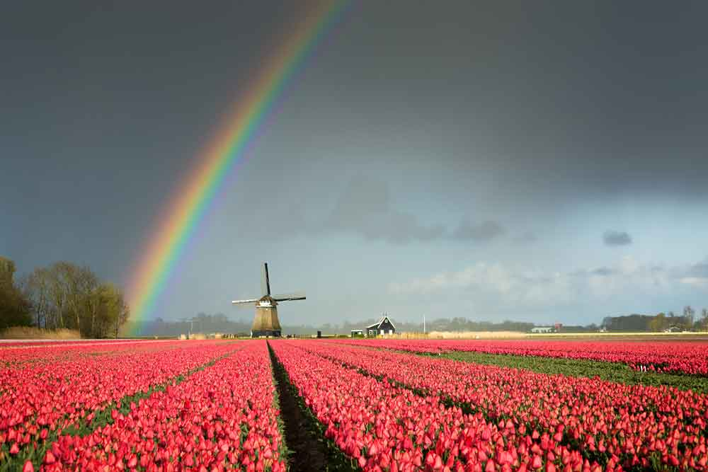 The Netherlands – Europe's powerhouse for software development?