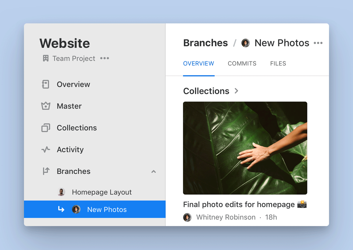 The overview of a Branch called 'New Photos' shows a Collection called 'Final photo edits for homepage'