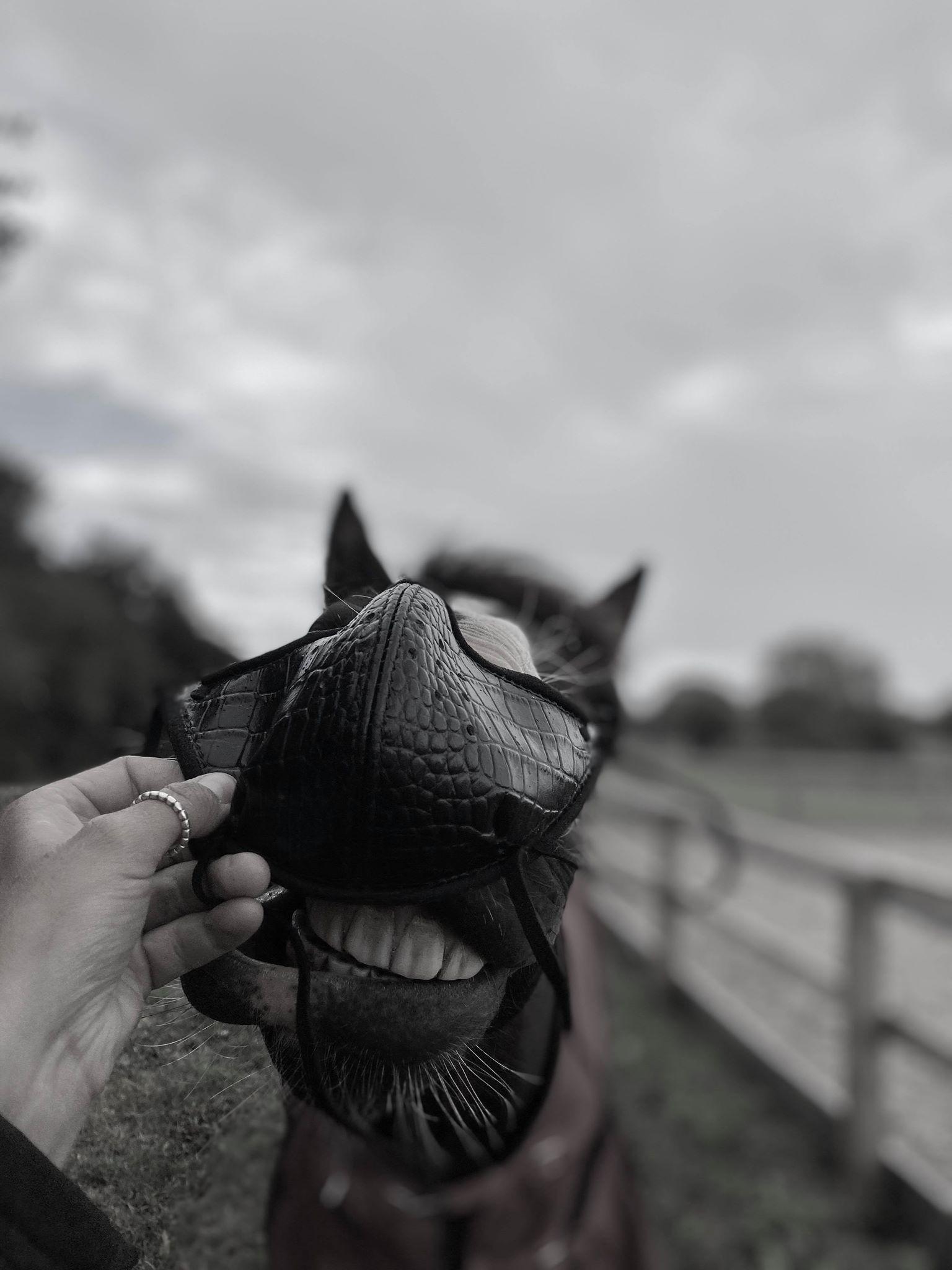 horse wearing mask