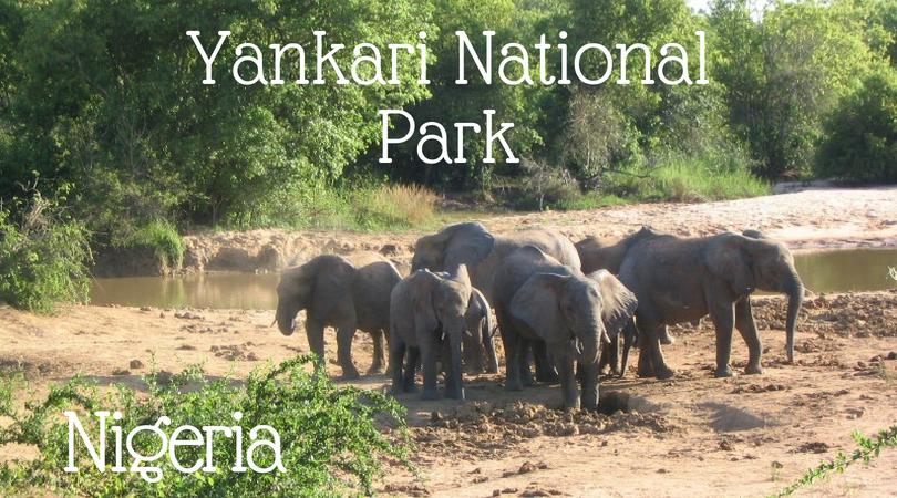 Nigeria Yankari National Park