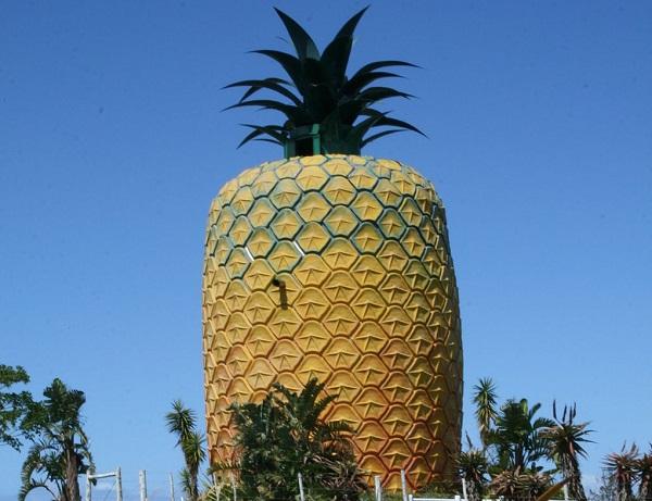Bathurst Pineapple