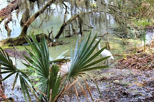 Chancery Lane Swamp
