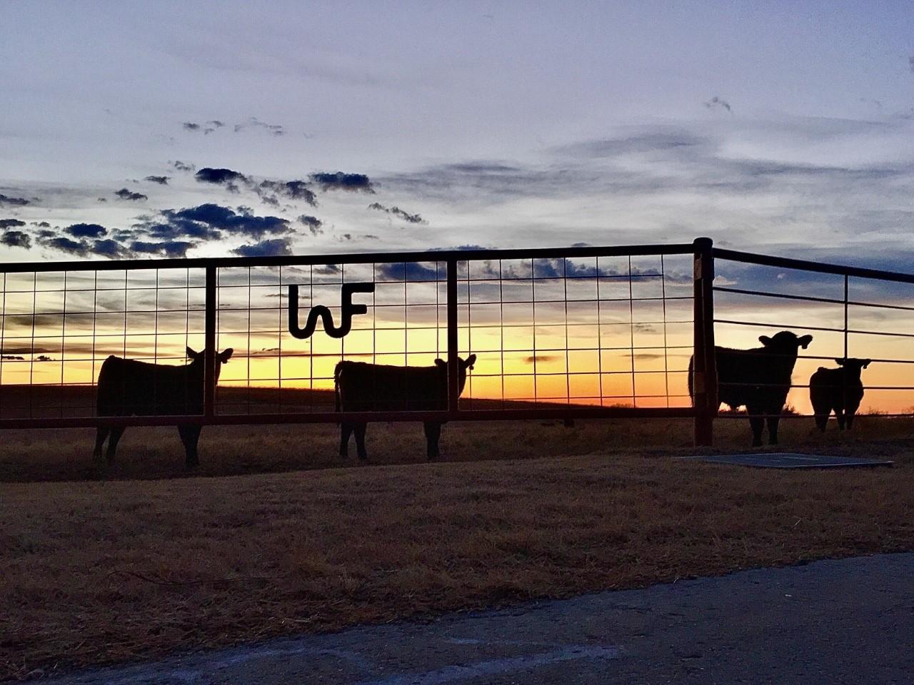 Wooderson Farms