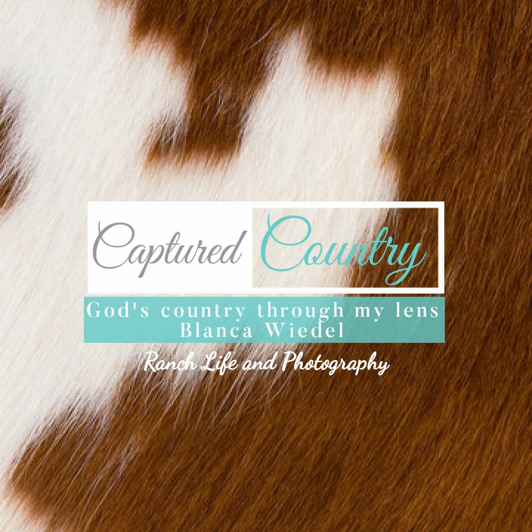 Captured Country by Blanca Wiedel