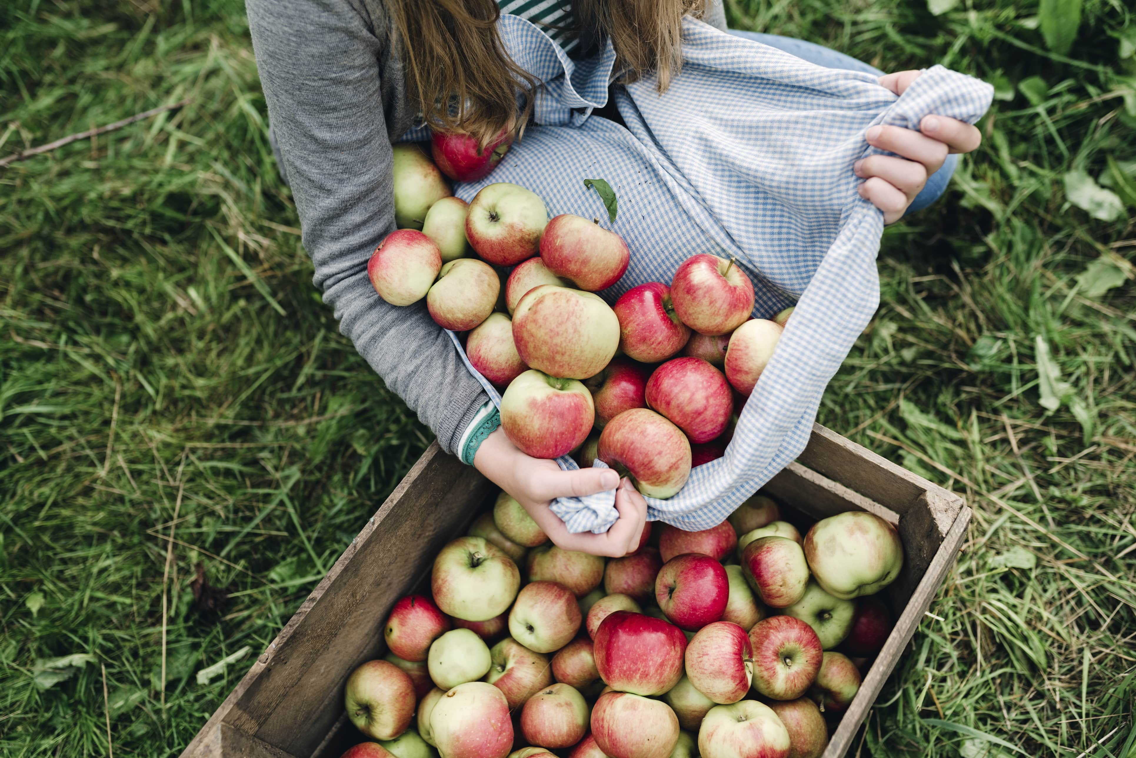 Person holding fresh apples