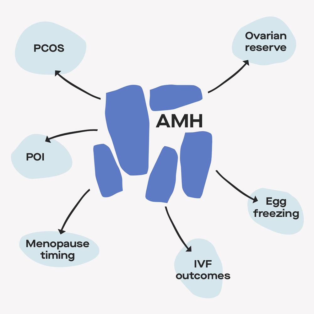 Anti-Mullerian Hormone (AMH) effects on body
