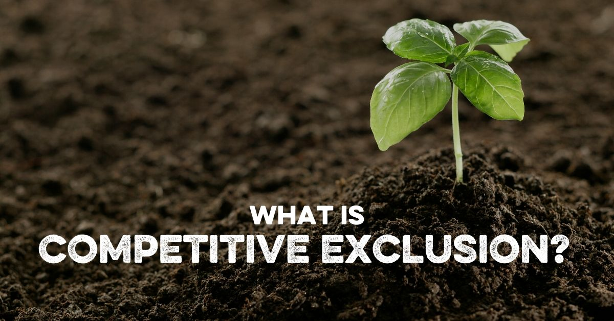 What is Competitive Exclusion?
