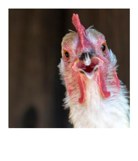 Poultry Farmer in Texas