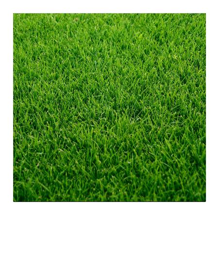 Landscaping Professional in Georgia