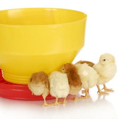 poultry supplement