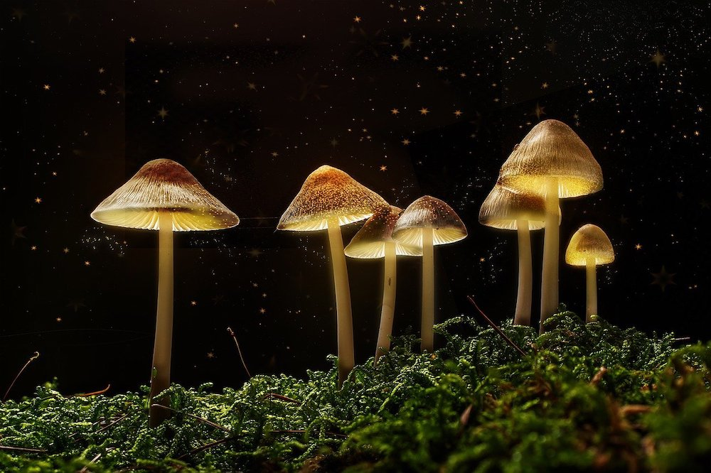 Are Psychedelics the Most Cost-Effective Way to Treat Mental Health Issues?