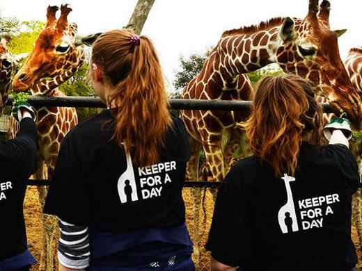 feeding the giraffes at london zoo fun
