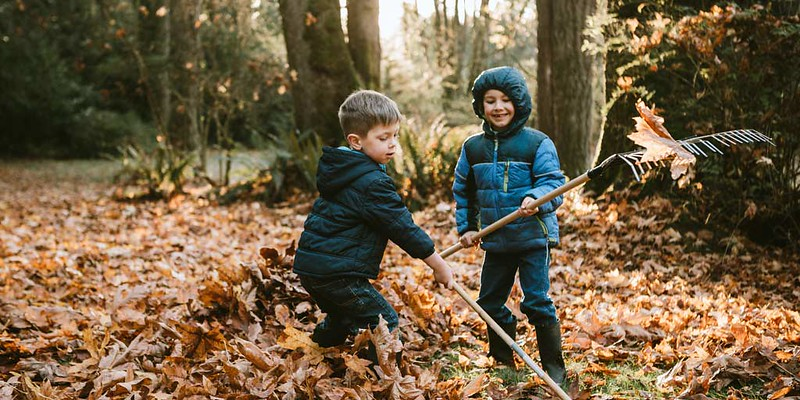 Boys playing in a forest.