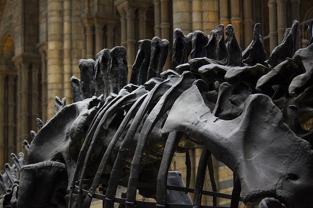 dinosaur skeleton at museum of london