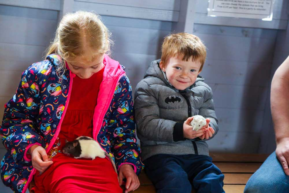 kids petting animals aboard the dreamland ark in margate