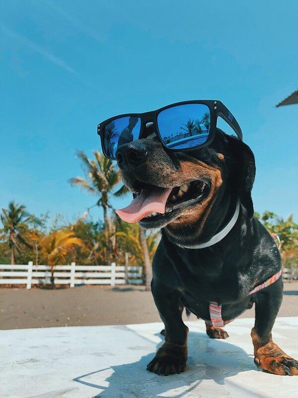 Hot Dog Seaside Jokes