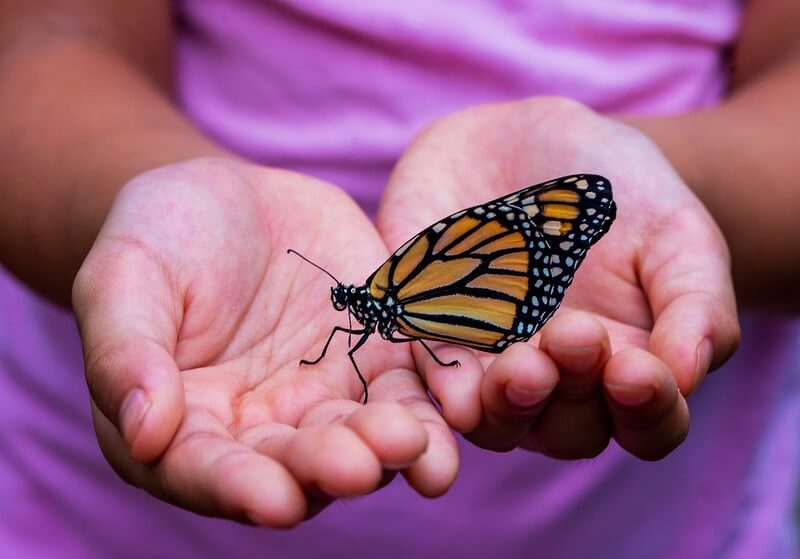 child holding butterfly in garden