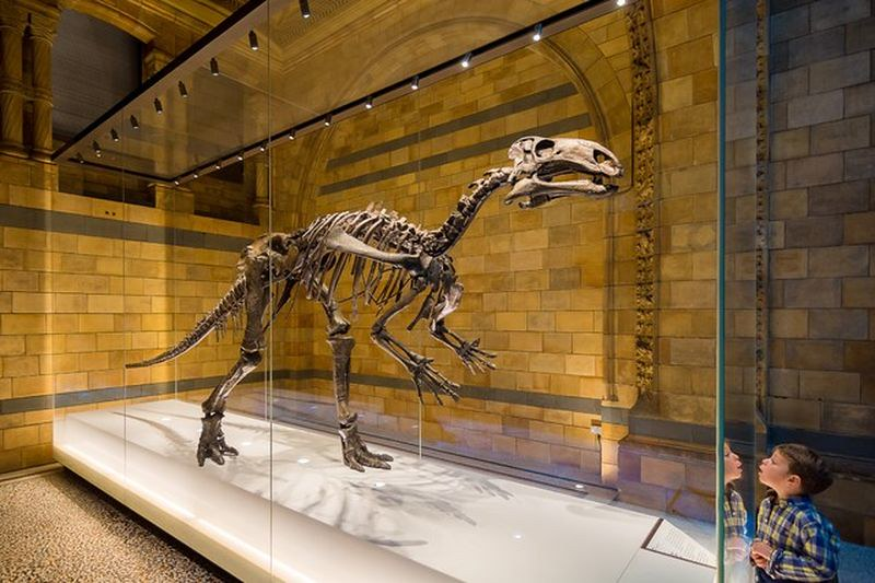 Dinosaur skeleton in glass case at the Natural History Museum.