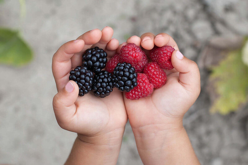 berries from PYO fruit farm