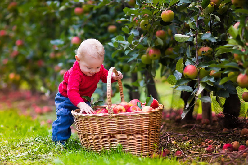 child at pick your own fruit farm