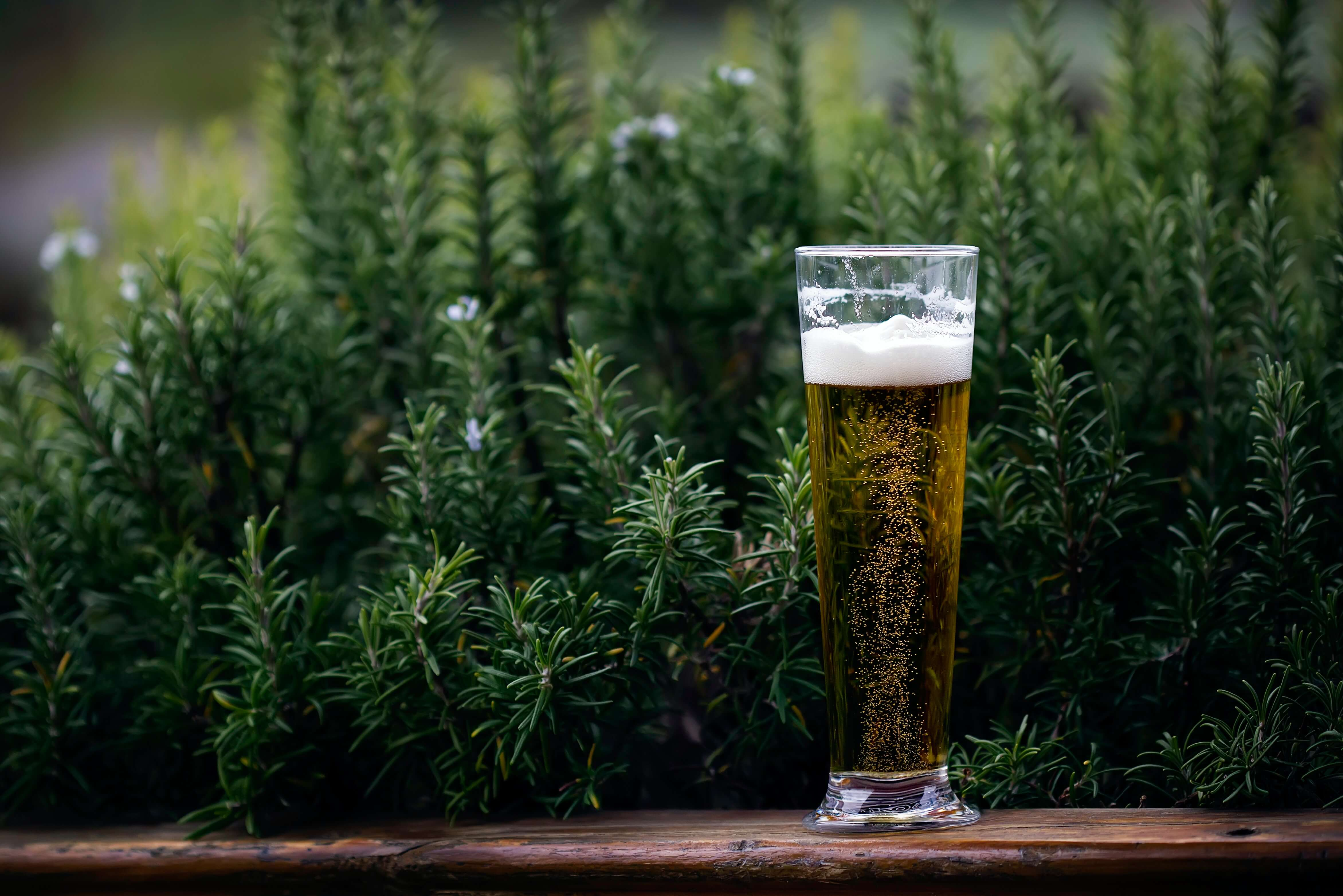 Cold Glass Of Beer By Some Plants