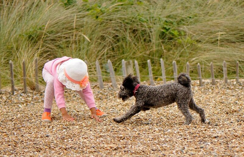 Child and dog playing on the beach.