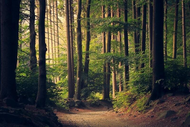 escape to highgate wood