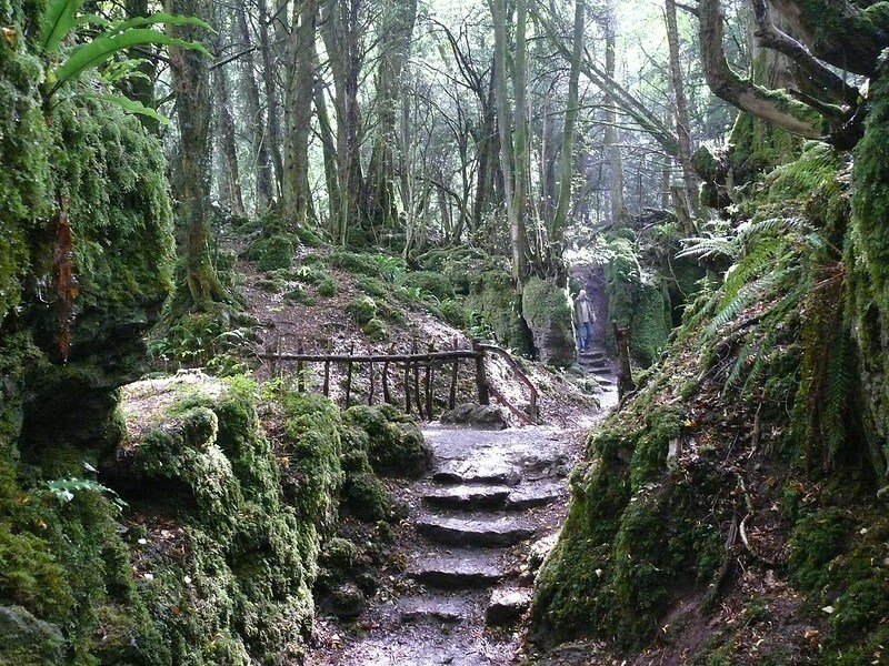 Puzzlewood in Forest of Dean